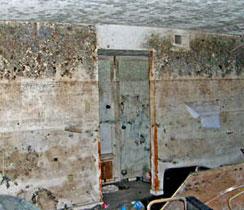 Mold Restoration Service